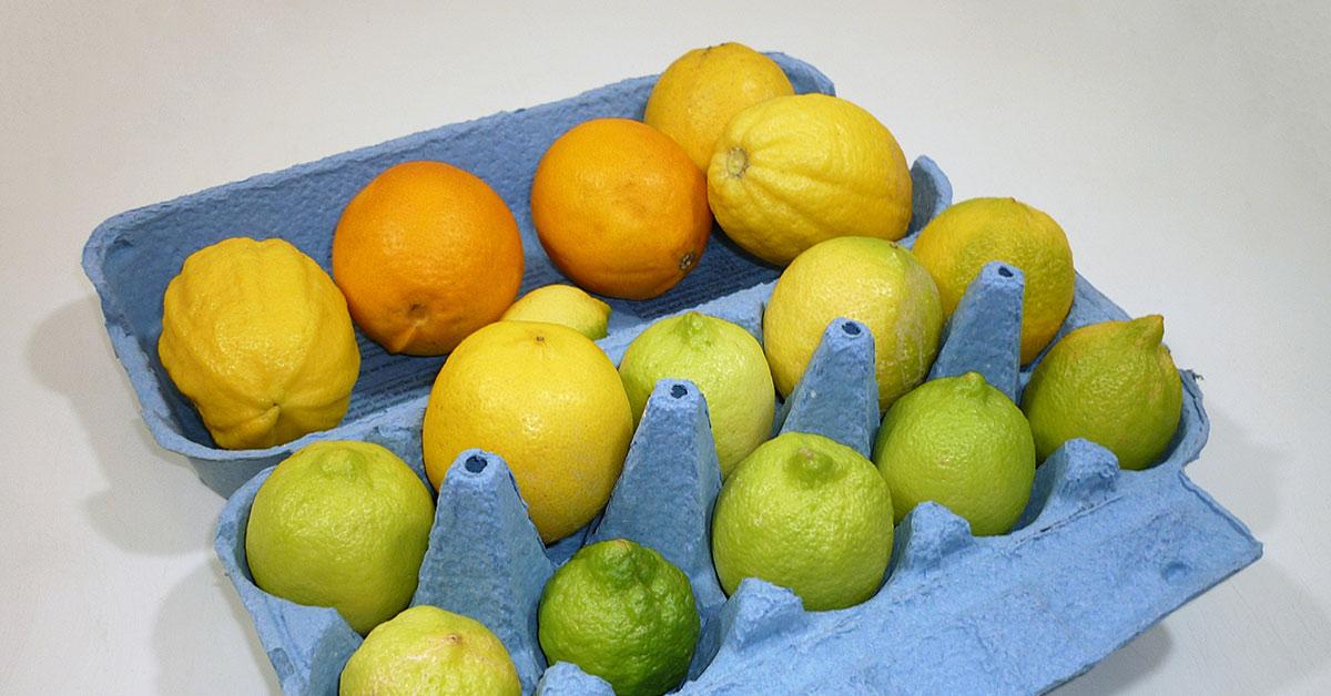 egg carton filled with lemons